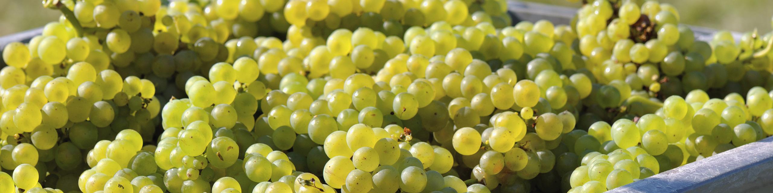 opération viticole marne